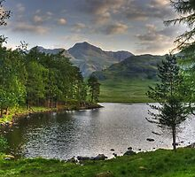 The Tarn in June... by Jamie  Green