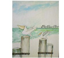 Florida Sea Gulls by Newhouser