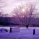 Winter in New England by Alberto  DeJesus