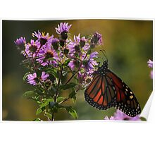 Monarch on New England Aster   Poster