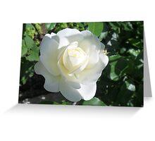 Shadowed white rose Greeting Card
