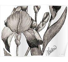 Iris Illustration-1 Poster