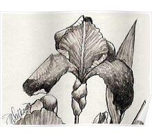 Iris Illustration-2 close up Poster