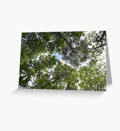 Bluebell Woods treetops Greeting Card