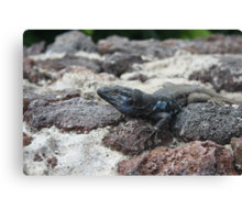 black and blue lizard in tenerife Canvas Print