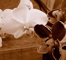 Sepia Orchids ^ by ctheworld