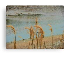 Wild Grasses at the River's Edge Canvas Print