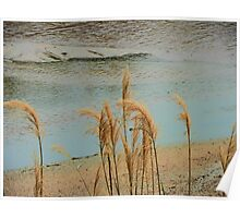Wild Grasses at the River's Edge Poster