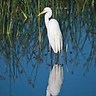 Egret at the Viera Wetlands by Per Hansen