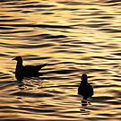 Golden Sunset Gulls by Martice