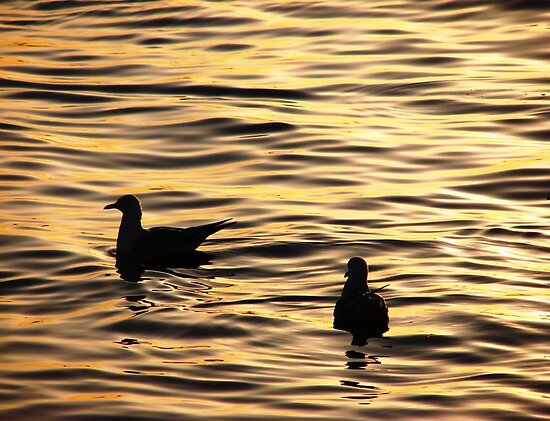 Golden Sunset Gulls by Martice