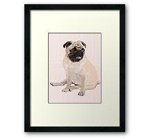 Puggsly Framed Print