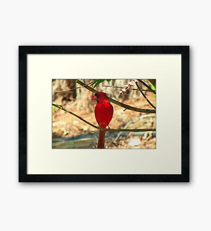 Taking a Breather from the Heat Framed Print
