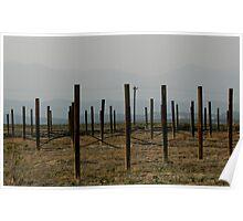 Abandoned Vineyard Poster