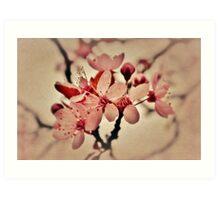 Burgeoning Blossom Art Print