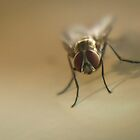 Macro Fly by Luke Milkovic