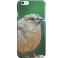 Sweet female cardinal fledgling on a rainy summer day iPhone Case/Skin