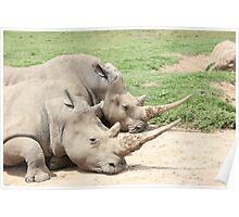 Rhino's Poster