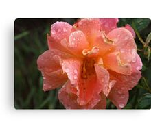 WEST ROSE Canvas Print