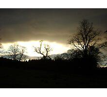 Eye of Trees (sunset, Falkland) Photographic Print