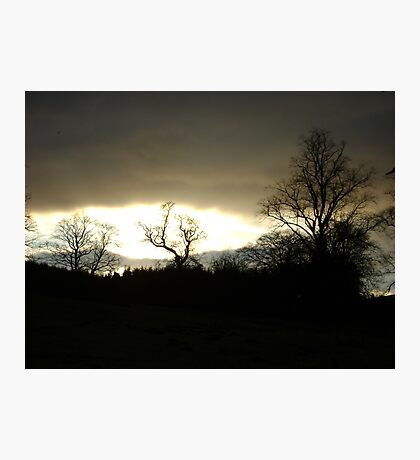 Eye of Trees (sunset, Falkland) Photographic Print