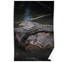 Cape York Crocodile 001 Poster