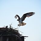 Clear for landing by Carl LaCasse