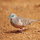 Peaceful Dove by Christopher Cole