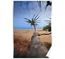 CAPE YORK PALM TREE Poster
