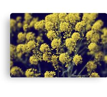 Vintage Wildflowers - Hazy summers day Canvas Print