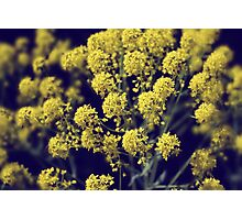 Vintage Wildflowers - Hazy summers day Photographic Print