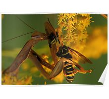 Mantis eating Wasp-mimic Fly Poster