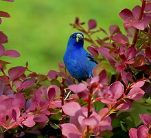 The Early Bird by John Absher