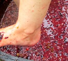 Wine stomping by D. D.AMO
