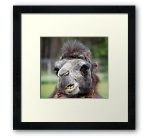 Get out of my Face Framed Print