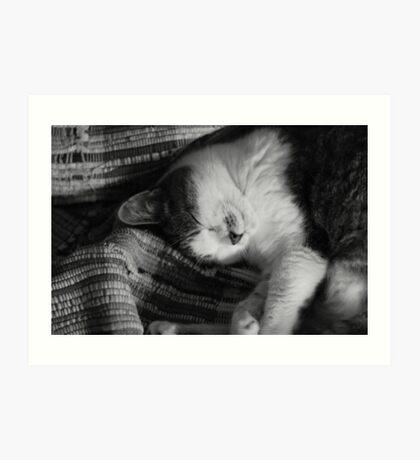Sleeping Cat Art Print
