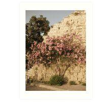 Oleander in Kyrenia. Art Print