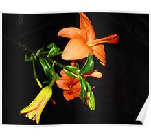 Lilies In Bloom Poster