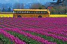 Field Trip. by Todd Rollins