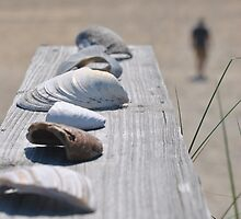 She sells sea shells by Robin Lee