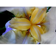 Golden Heart of the Iris Flower Photographic Print