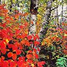 AUTUMN COLOR,CLINGMANS DOME by Chuck Wickham