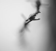barbed focus by RJPhoto