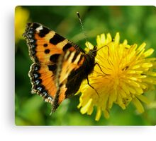 Small Tortoiseshell Canvas Print