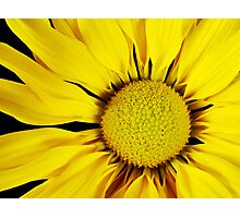 Flower Closeup Photographic Print