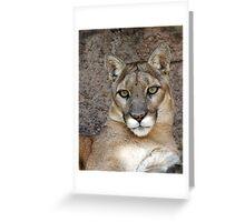 Sonora Desert Mountain Lion  Greeting Card