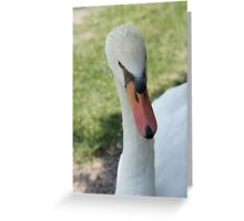 What are you looking at??? Greeting Card
