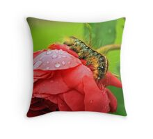 Caterpillar on rain drenched Rose Throw Pillow