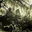 Beneath the boughs by Richard Pitman