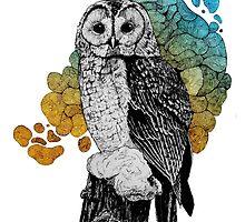 Barred owl in color by NickRileyArt